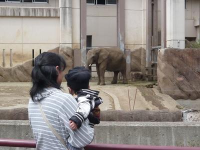 建材事務カッパとちびカッパ           盛岡市動物公園  ぞうさん
